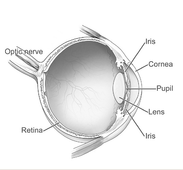 Eye diagram featuring the iris, cornea, pupil, lens, retina and optic nerve